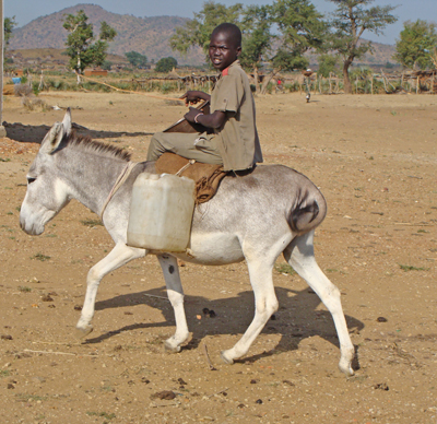 Donkey and Water Cart